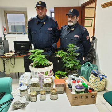 Produceva marijuana in casa: arrestato dalla Polizia