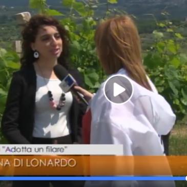 Guardia Sanframondi. Tgr Rai Campania, per parlare di Vini e Turismo nel Sannio, con l'Assessore al turismo Morena Di Lonardo. 29