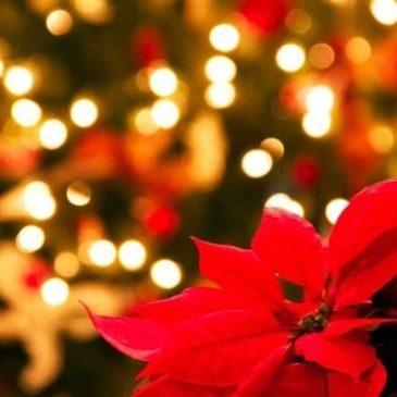 Una giovane madre sta morendo e in famiglia le stanno organizzando il Natale in anticipo.