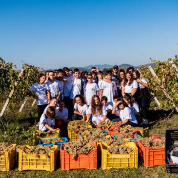 Castelvenere: 'Vendemmia Scolastica' promossa da Comune e Istituto Comprensivo