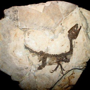 """Immagini dal Sannio: """"Ciro"""", il baby dinosauro che ha conquistato il mondo"""