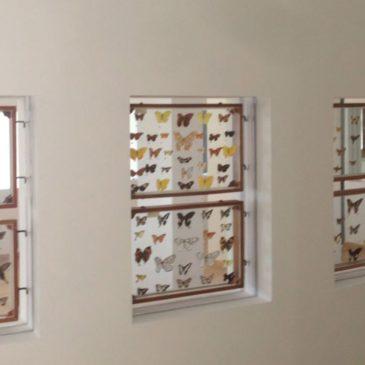 Immagini dal Sannio: il Museo delle farfalle di Guardia Sanframondi