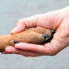 Giornata mondiale dei diritti dell'uomo e degli animali