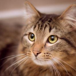 Origini e curiosità della Festa del Gatto. Sapete che il gatto nero porta fortuna?