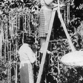 Accadde oggi: 1 aprile 1957, scoperto un albero da cui nascono spaghetti