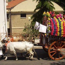 Immagini dal Sannio: le tradizionali Carresi del Basso Molise