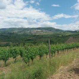 Oggi vado a… la via del vino del Sannio