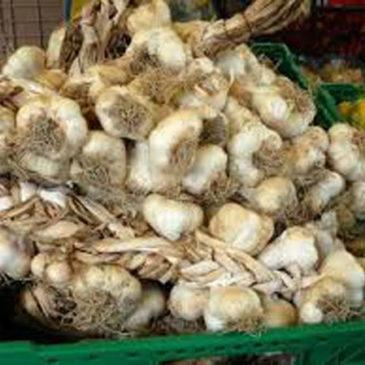 Perché il giorno di San Giovanni si compra e si regala aglio e si prepara il nocino