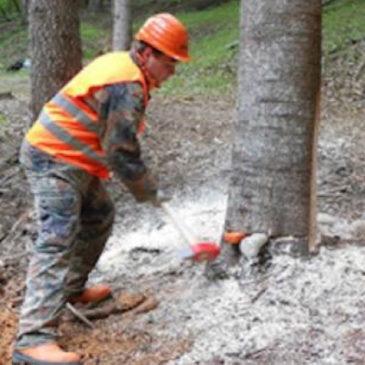Comunità Montana Fortore: predisposto il pagamento degli operai forestali