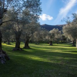 Immagini dal Sannio: Venafro e il Parco regionale dell'ulivo