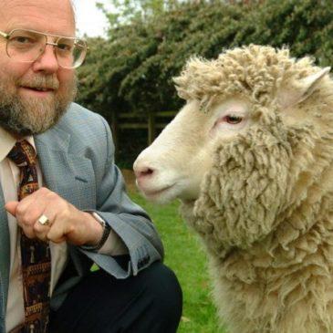 Accadde oggi: 5 luglio 1996, nasce la pecora Dolly