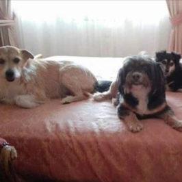Oggi è la Giornata mondiale del cane: quanto è importante un amico a quattro zampe?