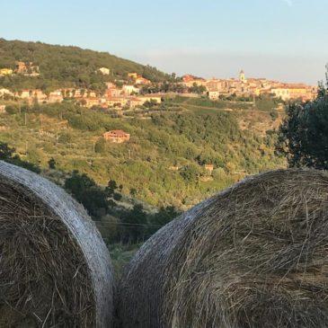 Immagini dal Sannio: agricoltura e ruralità del Sannio beneventano