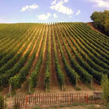 Sannio, lutto nel mondo del vino per la morte di Antonio Iannella