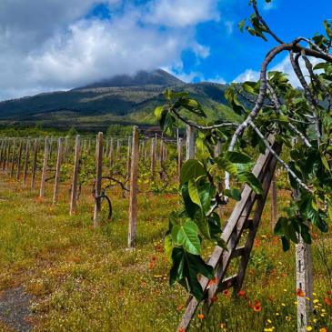 Nuova linfa ai terreni del Vesuvio con l'humus di lombrico